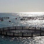 ۸۰ هزار تن ماهی در قفس در آبهای دریایی کشور تولید میشود