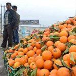 بنیاد برکت برای خرید و صادرات محصول مرکبات مازندران دست به کار می شود