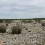 ۹ هزار هکتار از تالاب میانکاله خشک شده است