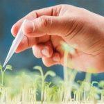 محصولات کشاورزی تراریخته چه مزایایی دارند