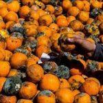 چالش بازار محصولات کشاورزی مازندران