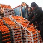 اجازه خریدپرتقال های غیر سالم را نمی دهیم