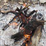 برداشت ۳٫۵ میلیون متر مکعب چوب از جنگل های مازندران برای زندگی روستاییان