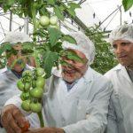 بهره برداری از بزرگ ترین گلخانه بدون خاک سبزی و صیفی کشور در مازندران