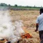 سوزاندن کاه و کلش مزارع برنج چه تبعاتی برای محیط زیست دارد؟