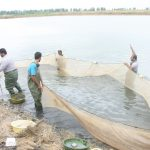 هشدار شیلات به خطر خشکی آببندان های پرورش ماهی در شرق مازندران