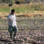 اشتغال روستایی مازندران بیش از ۳ هزار میلیاردریال بودجه دارد