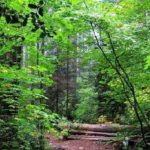 جشن پایان بهره برداری از جنگل های شمال درسال جاری