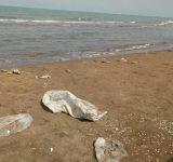 تلفات ماهیان در ساحل گهرباران ناشی از آلودگی دریا نیست