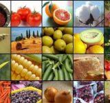 صادرات محصولات باغی مازندران ۳ برابر شد