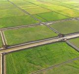 معاون وزیر جهاد کشاورزی: طرح زهکشی ۴۰۰ هزار هکتار زمین های شمال کشور تهیه شد